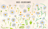 60 Watercolor Daisy Painted Graphics Illustration