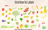 46 Hand Painted Fruits and Vegetable Illustration