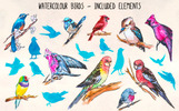 20 Colourful Watercolor Bird Graphics Illustration
