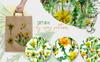 Bright Yellow Dandelion PNG Watercolor Set Illustration Big Screenshot