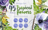 Tropical Flowers PNG Watercolor Set Illustration Big Screenshot