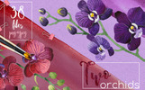 Two Orchids PNG Aquarelle Set Illustration