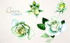 White Rose Watercolor PNG Flower Set Ilustração №69373 Screenshot Grade