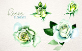 """White Rose Watercolor PNG Flower Set"" - Ілюстрація"