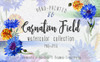 Carnation field PNG watercolor set Illustration Big Screenshot