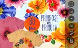 Primrose Or Primula Flowers - PNG Watercolor Illustration
