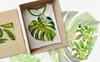 Tropics Leaves Monstera -  PNG Watercolor Illustration Big Screenshot