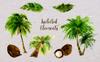 Palm Tree PNG Watercolor Set Illustration Big Screenshot
