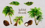 Palm Tree PNG Watercolor Set Illustration
