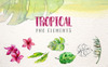 Tropical Leaves Collection PNG Watercolor Set Illustration Big Screenshot