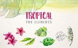 Tropical Leaves Collection PNG Watercolor Set Illustration