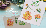 Roses Watercolor Yellow png Illustration