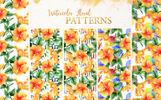 Naranja Hibiscus Watercolor Png Illustration