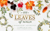 "Ilustrace ""Leaves Of Acacia Watercolor Png"" Velký screenshot"
