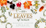 "Ilustrace ""Leaves Of Acacia Watercolor Png"""