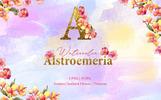 Alstroemeria Watercolor Png Illustration
