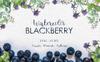 Blackberry Watercolor png Illustration Big Screenshot