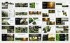 """PowerPoint Vorlage namens """"Forest-"""" Großer Screenshot"""
